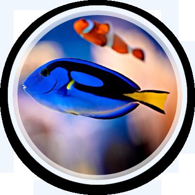 fish-showcase-2